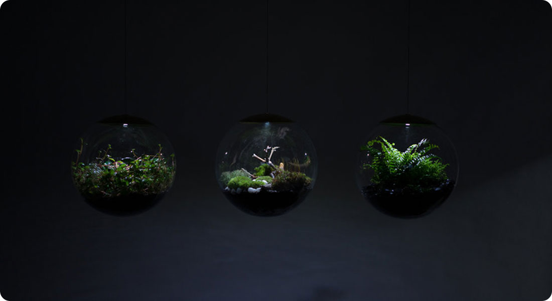 Apportez une touche naturelle avec ces terrariums pour votre intérieur !
